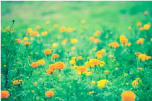 きれいな花々の咲く草原の風景